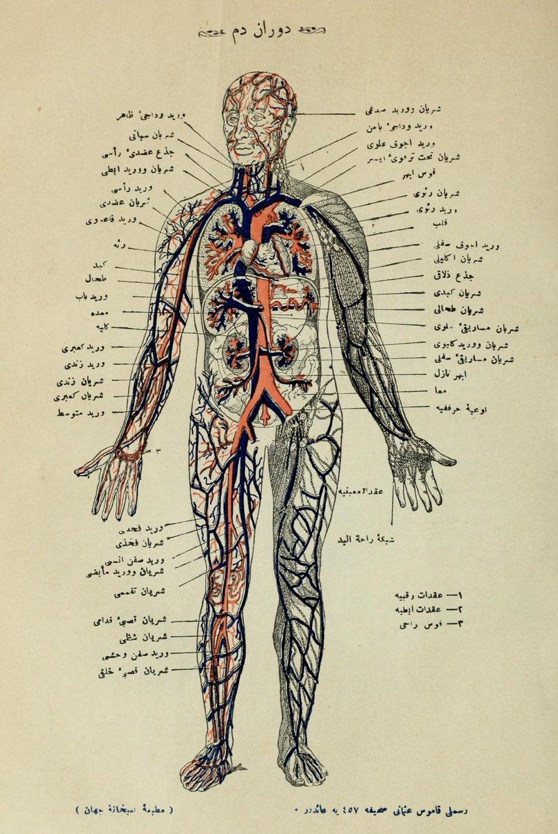 Diagram Of Internal Organs Ottoman Imperial Archives On Twitter Diagram Of Internal Organs