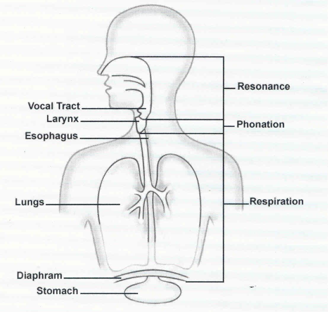 Diagram Of Respiratory System Respiratory System Simple Diagram