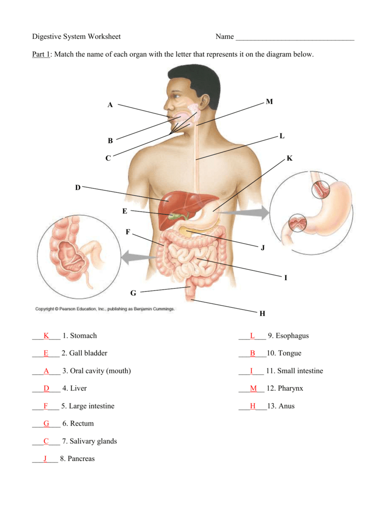 Diagram Of The Digestive System Anatomy Quiz Digestive System