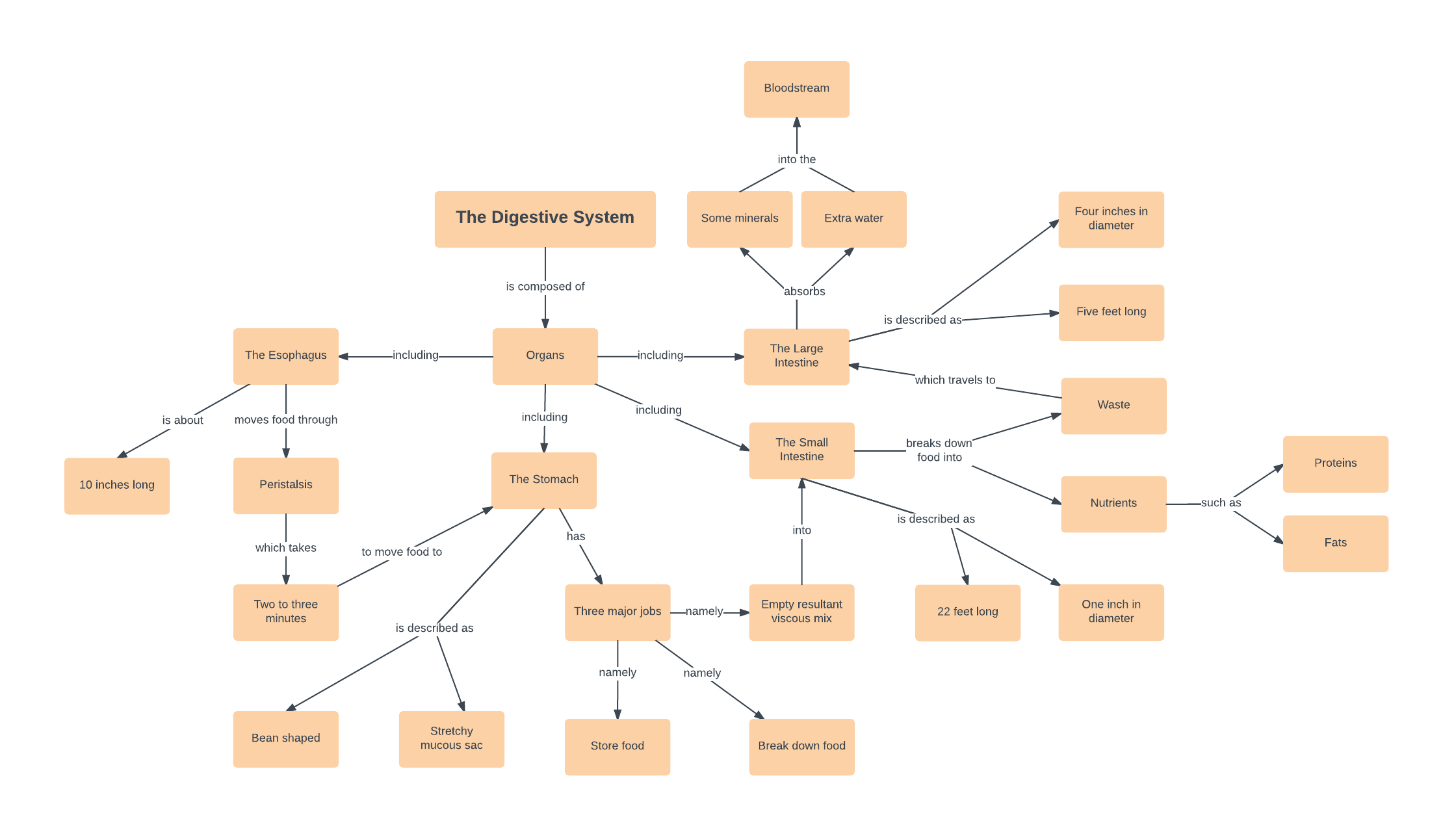 Diagram Of The Digestive System Digestive System Concept Map Template Lucidchart