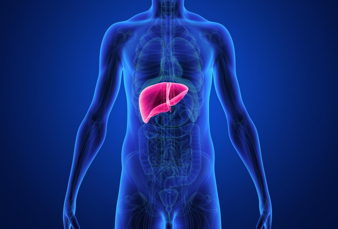 Diagram Of The Liver Liver And Cholesterol Whats The Link