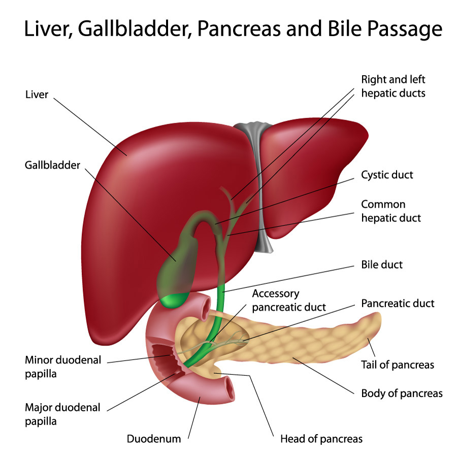 Diagram Of The Liver Primary Biliary Cholangitis Jackson Siegelbaum Gastroenterology