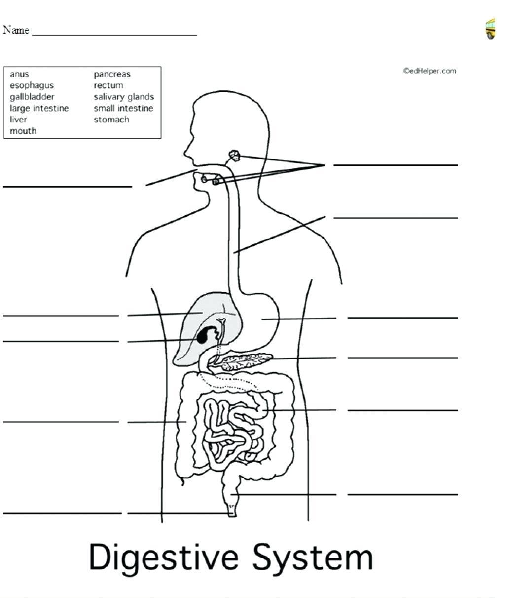 Digestive System Diagram Worksheet Diagram For Kids Simple Digestive System Diagram For Kids Digestive