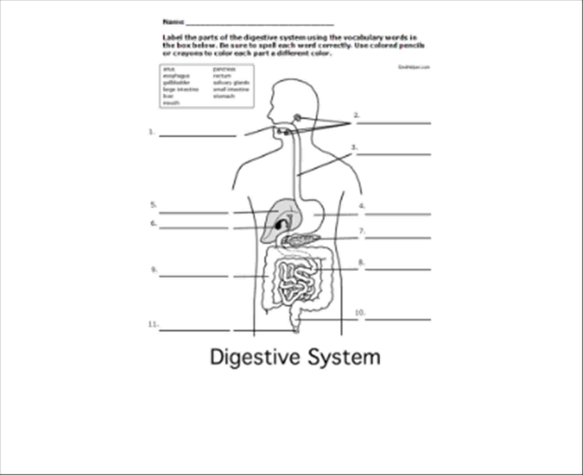 Digestive System Diagram Worksheet Diagram Of A Digestion System With Label Diagram Of Anatomy