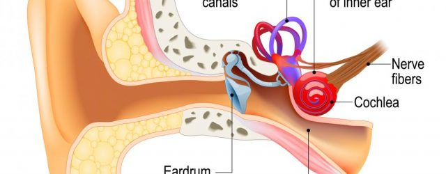 Ear Infection Diagram Larinthitis Causes Symptoms Treatment And Recovery
