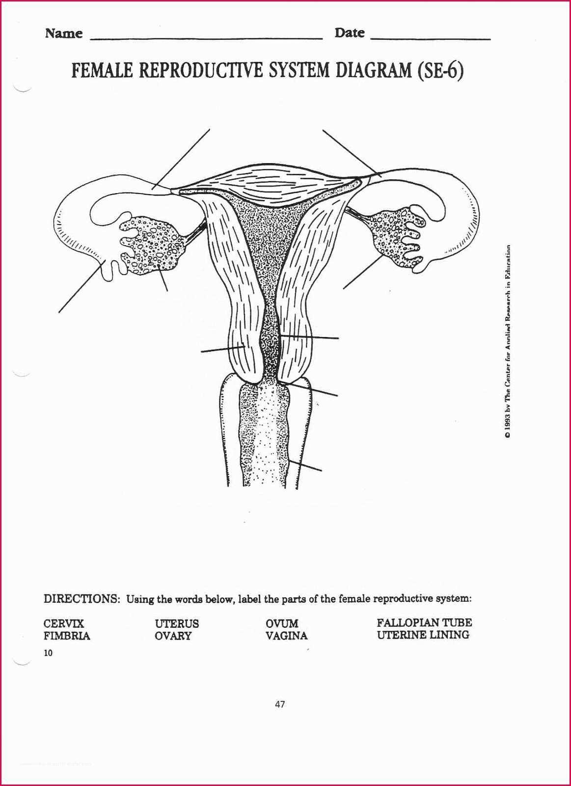 Female Reproductive System Diagram 37 Female Reproductive System Diagram Noibaiairporttransfer