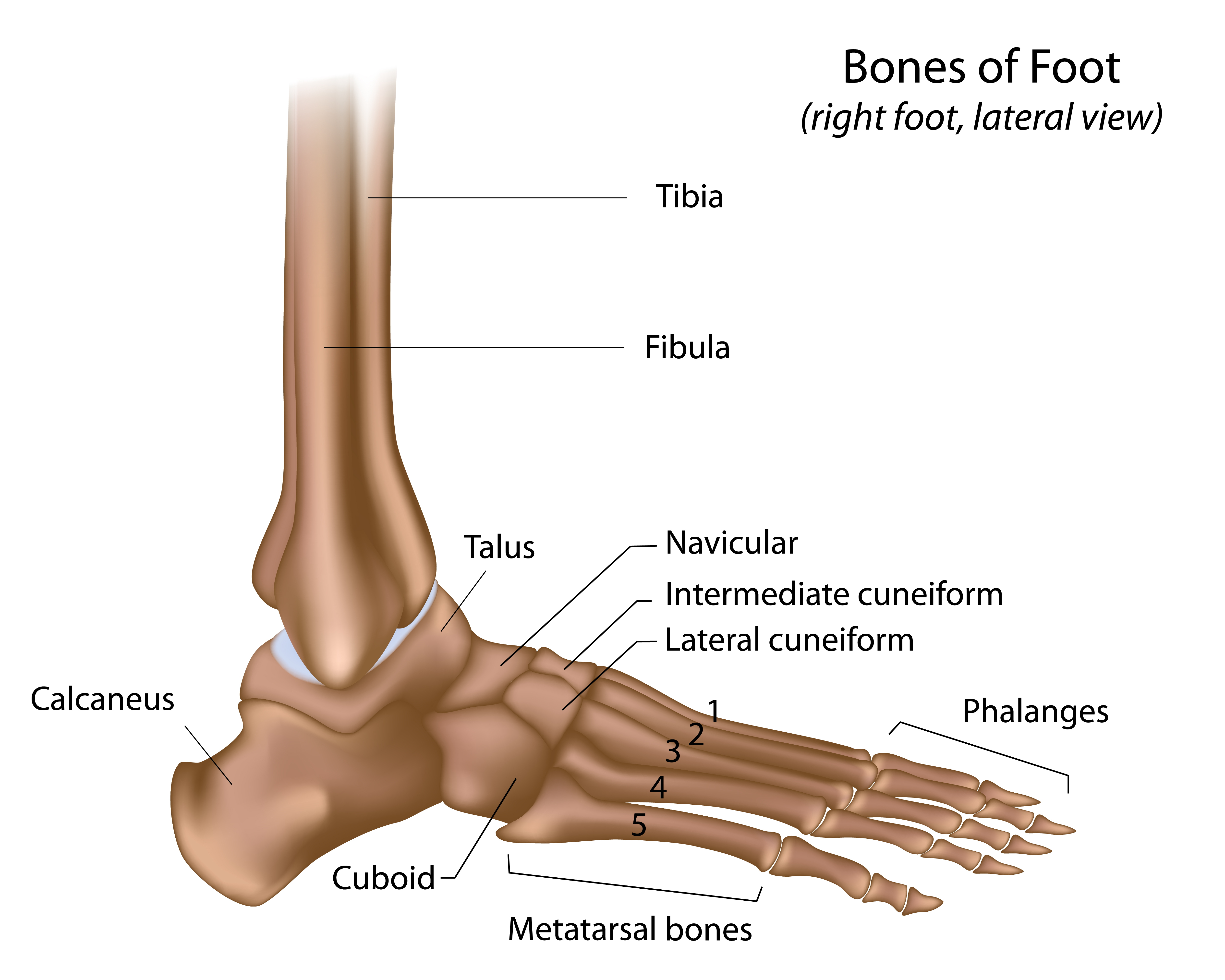 Foot Pain Diagram Ankle And Foot Pain Massage Therapy Connections