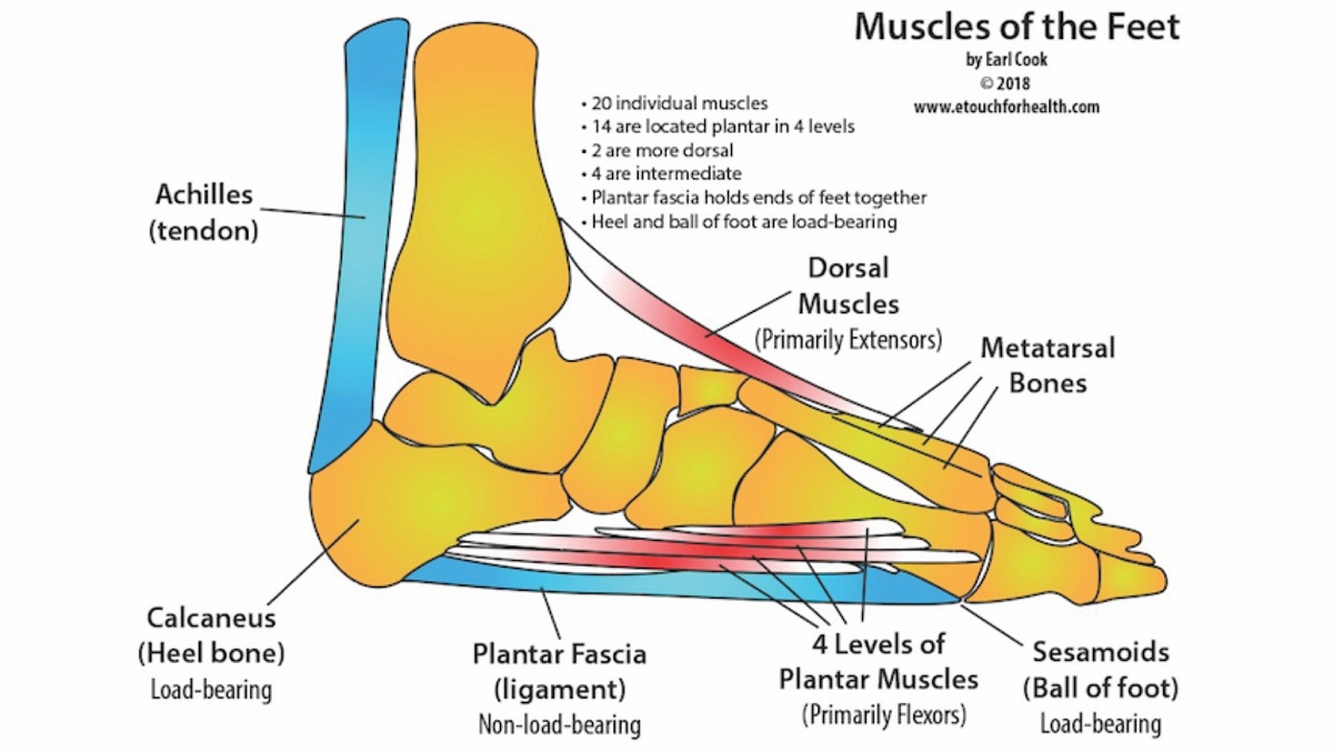 Foot Pain Diagram Award Winning Touch For Health Instructor Teaches Foot Pain