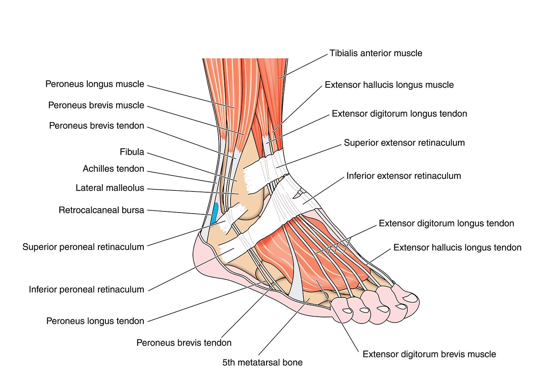 Foot Pain Diagram Foot Ankle Elmhurst Orthopaedics