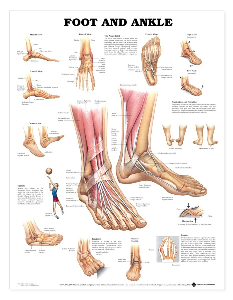 Foot Pain Diagram Podiatry Service Perkasie Pa Upper Bucks Foot Ankle Medical Center