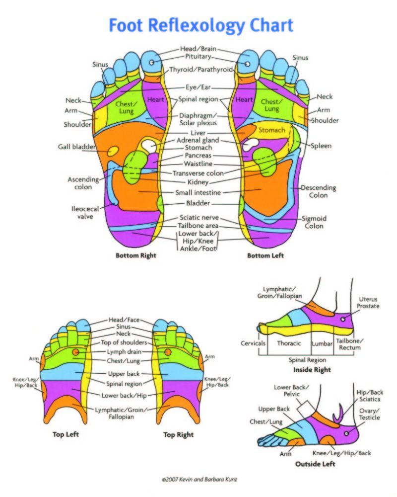 Foot Reflexology Diagram 31 Printable Foot Reflexology Charts Maps Template Lab