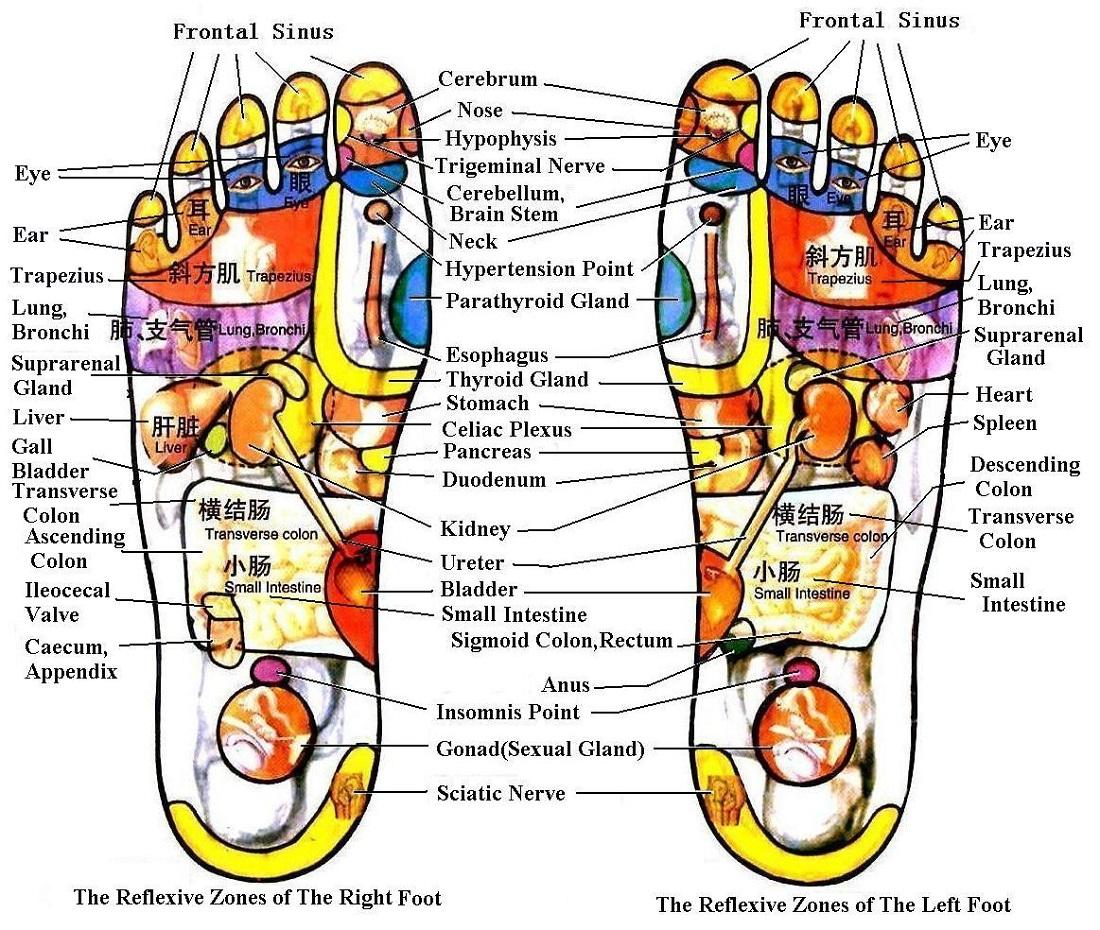 Foot Reflexology Diagram Diagrams Of Foot Printable Diagram