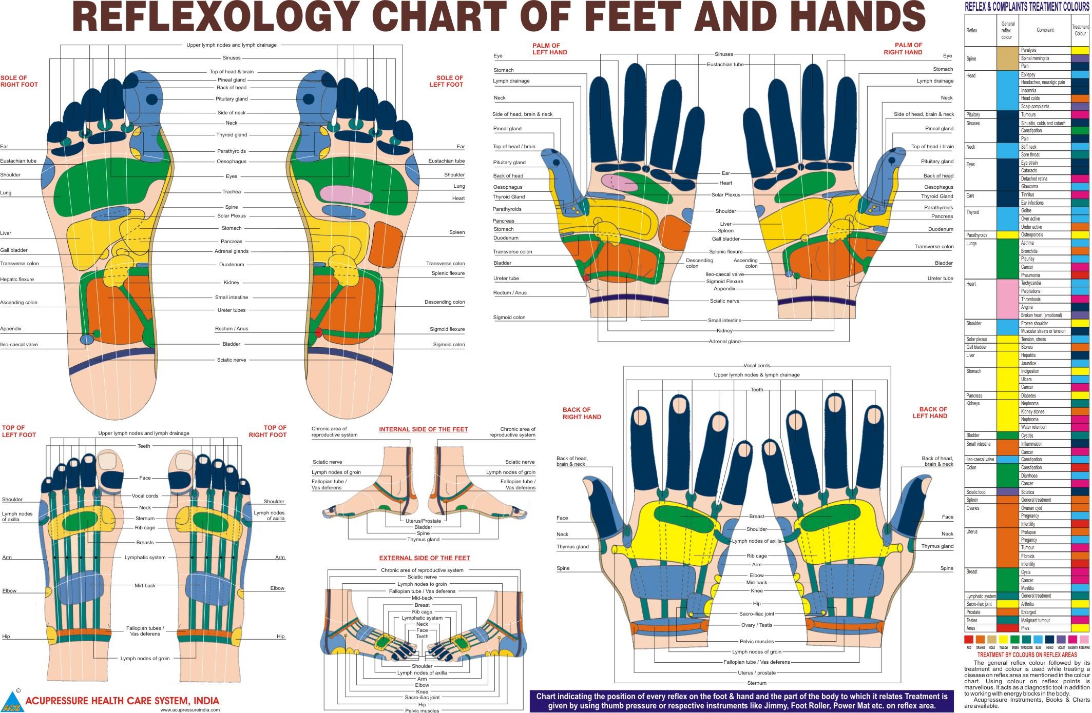 Foot Reflexology Diagram Exactly How Does Reflexology Work Reflexology Schools