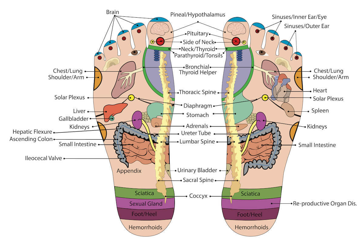 Foot Reflexology Diagram Foot Pressure Points And How They Can Be Used To Treat Pain And