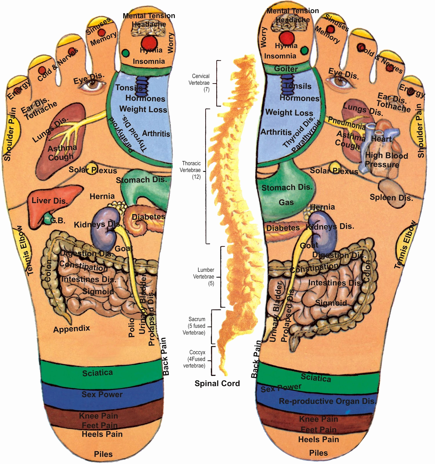 Foot Reflexology Diagram Foot Reflexology Chart Right Foot Inspirational Acupressure