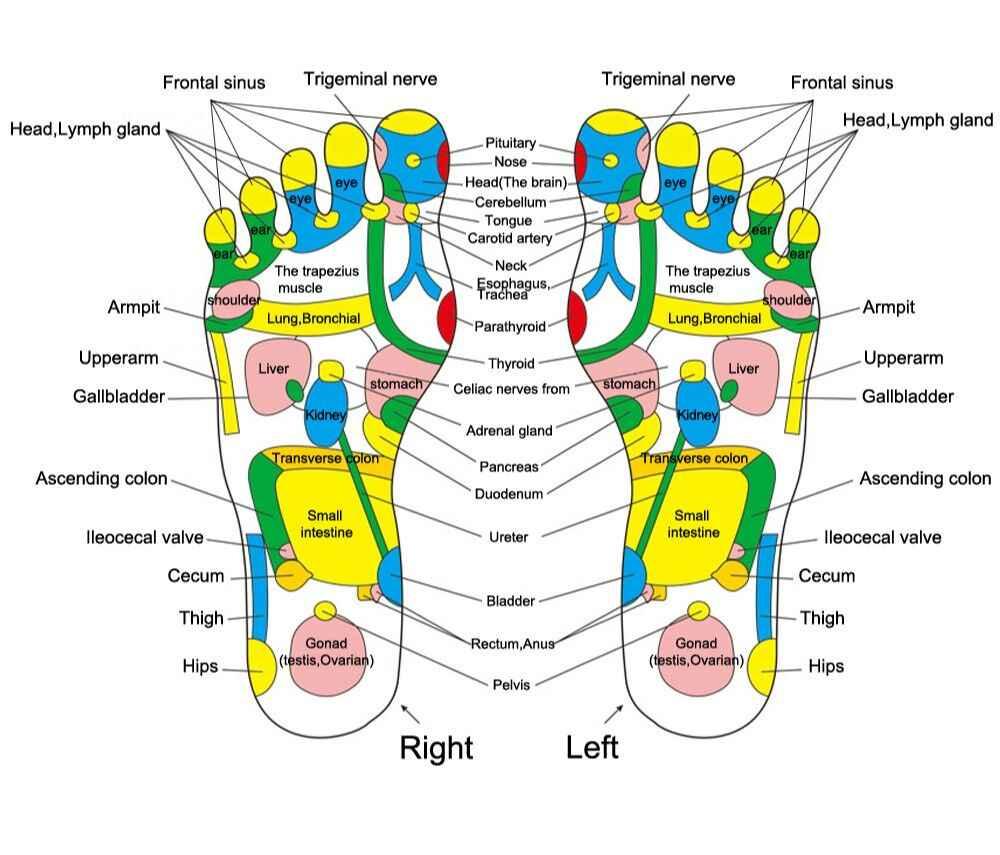 Foot Reflexology Diagram Kongdy 1 Piece Acupuncture Cobblestone Colorful Foot Reflexology