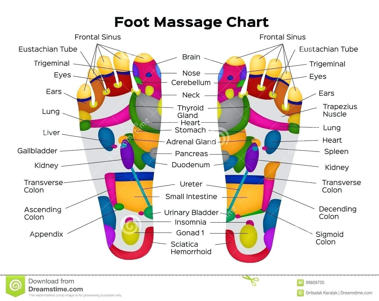 Foot Reflexology Diagram Reflexology Chart Feet Lagunapaperco