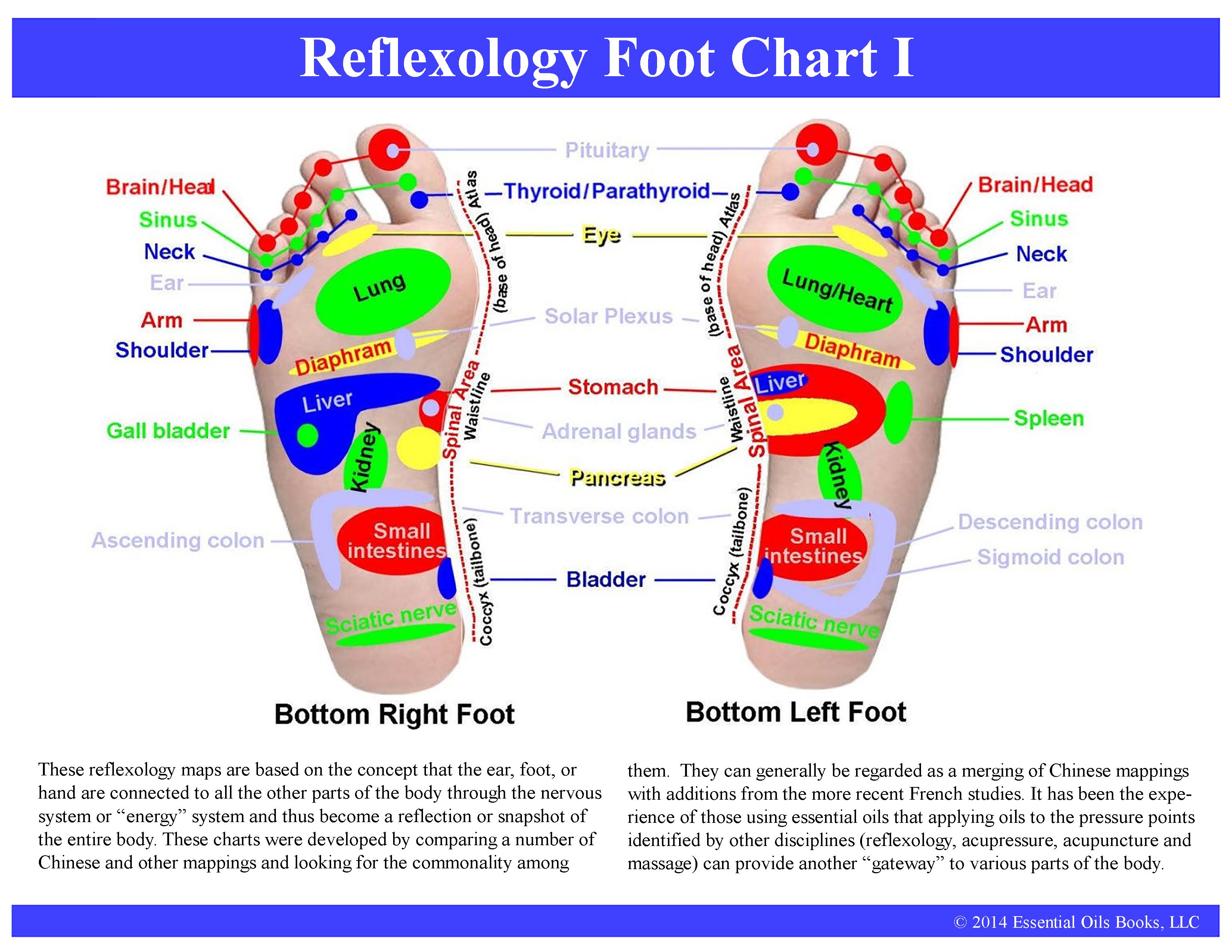 Foot Reflexology Diagram Reflexology Feet Charts 10 Handouts Home