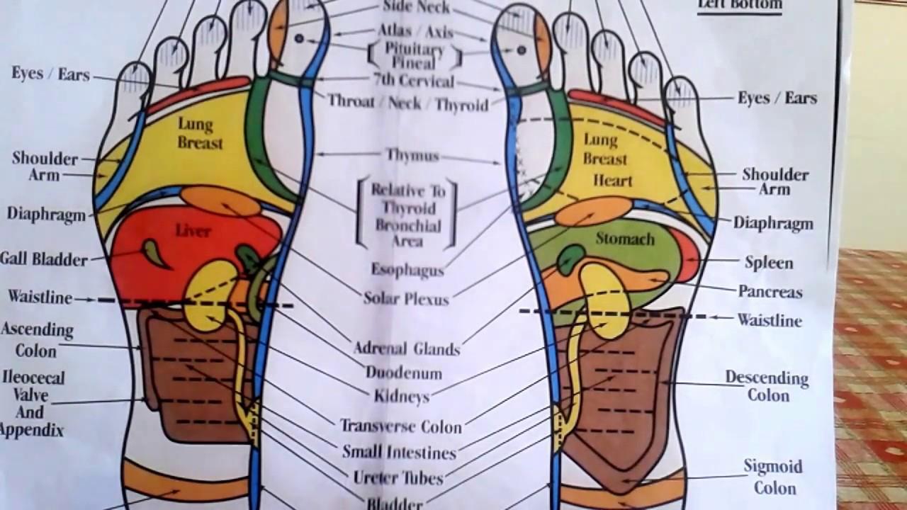 Foot Reflexology Diagram Reflexology How To Read A Foot Reflexology Chart Youtube