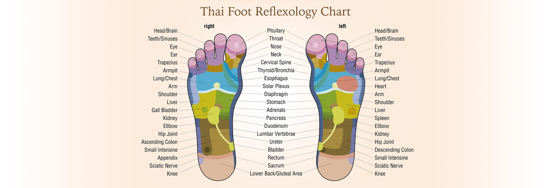 Foot Reflexology Diagram Thai Foot Reflexology San Franciscos Original Thai Massage