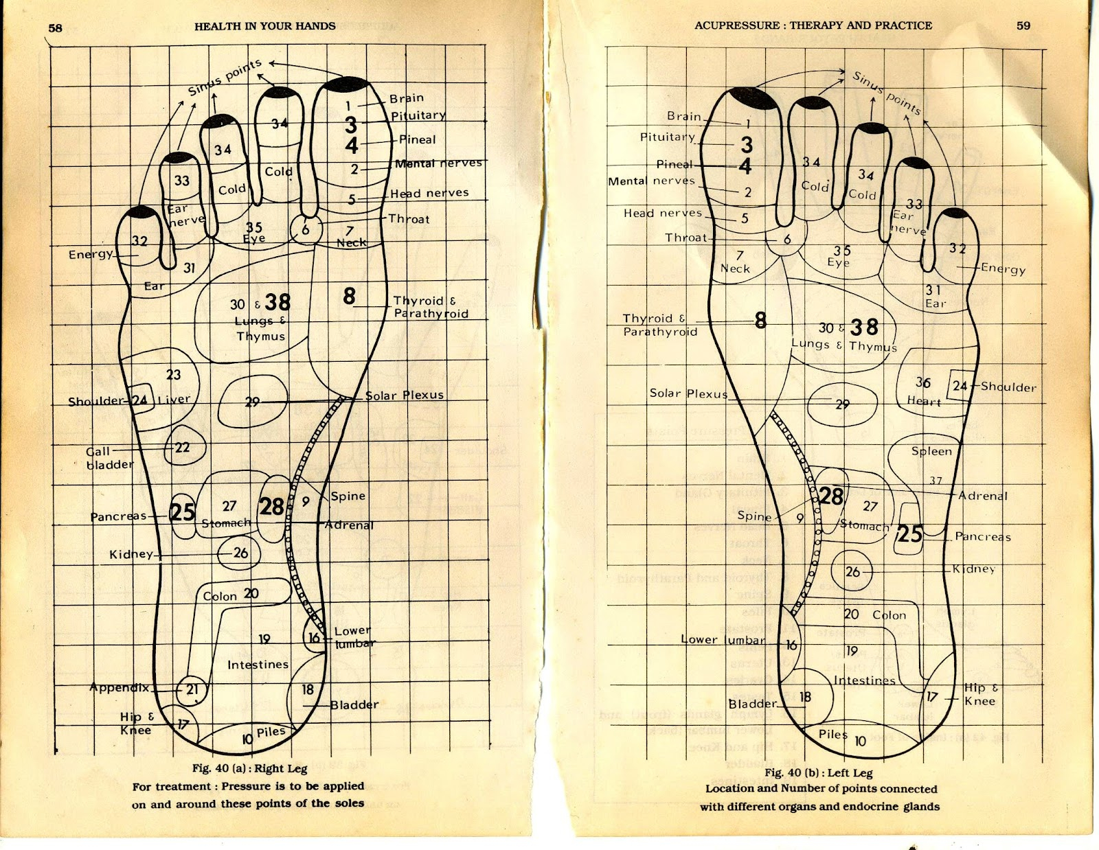Foot Reflexology Diagram Your Foot Has The Full Map Of Your Body And Here Is How To Read It