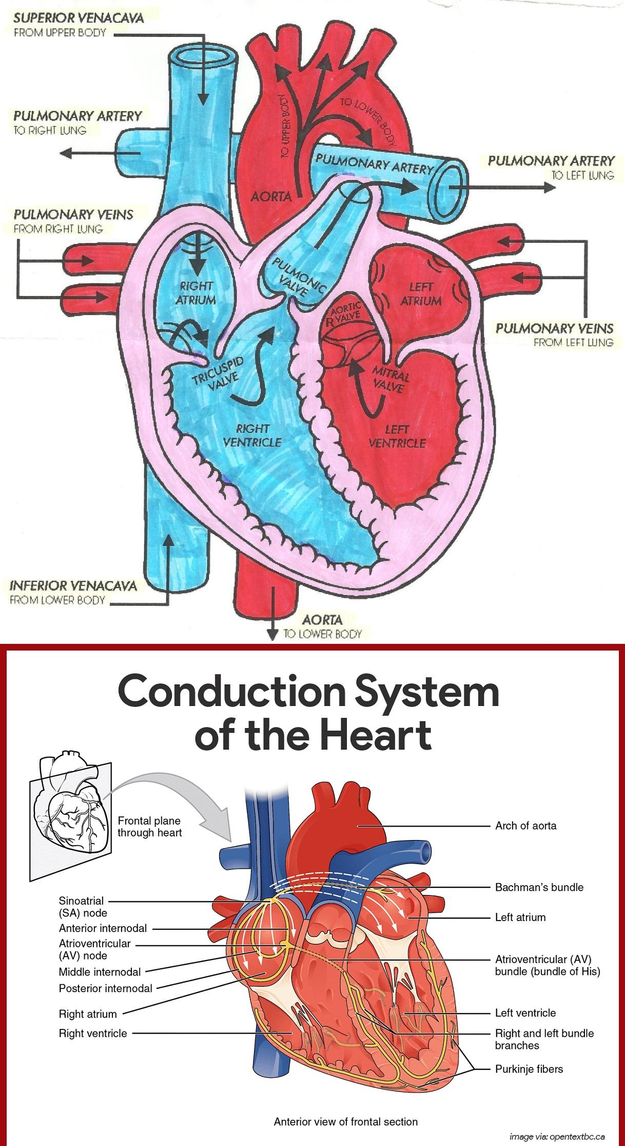 Heart Blood Flow Diagram Diagram Of Heart Blood Flow For Cardiac Nursing Students Nclex Quiz