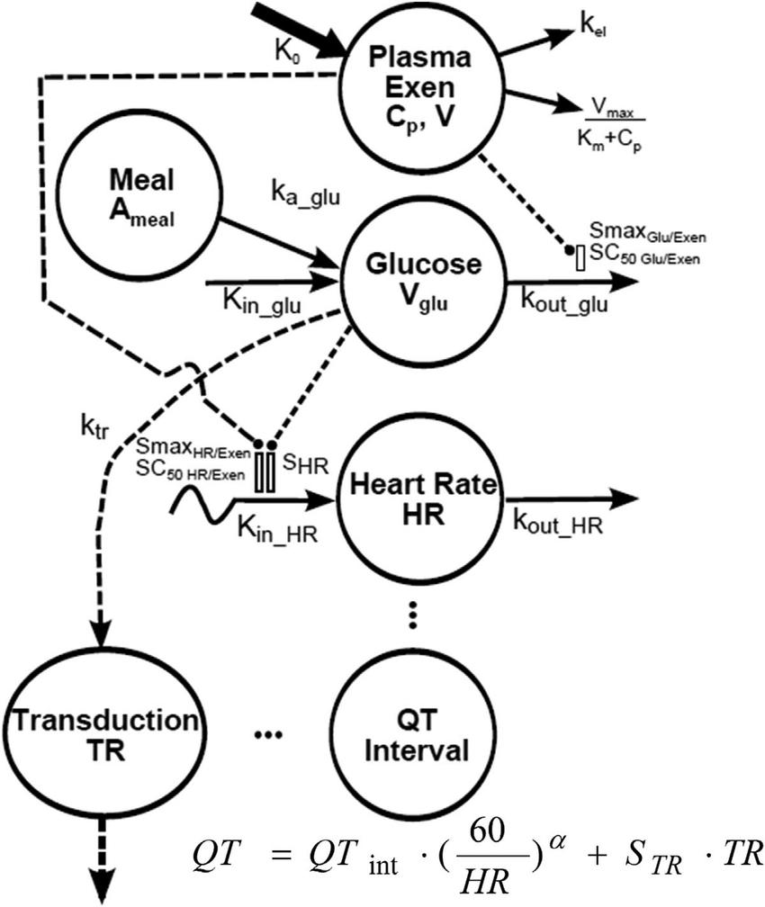 Hr Diagram Definition Pharmacokinetic And Pharmacodynamic Model Diagram Symbols And Model