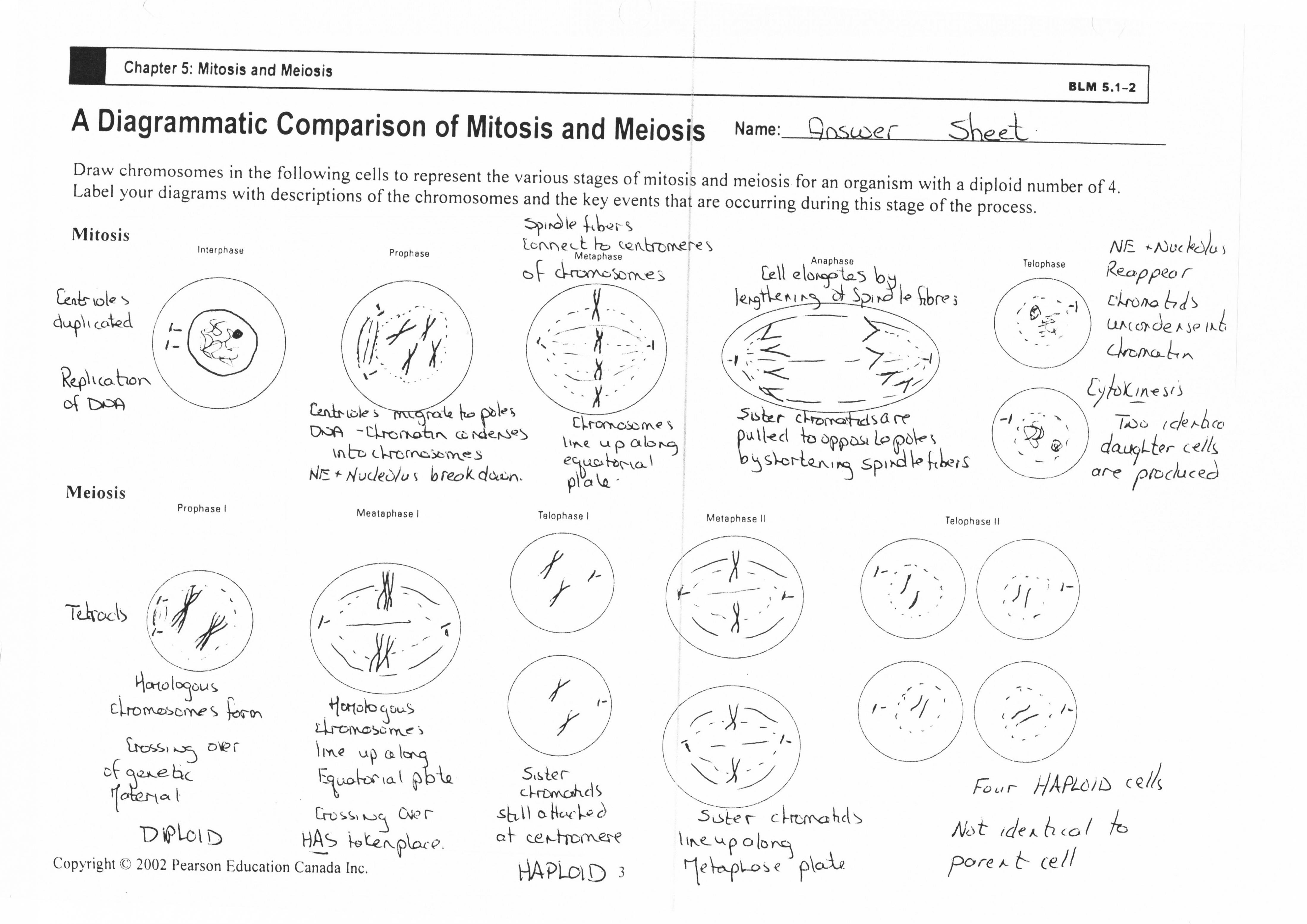 Mitosis Meiosis Venn Diagram 75 Unmistakable Comparing Mitosis And Meiosis Worksheet Key