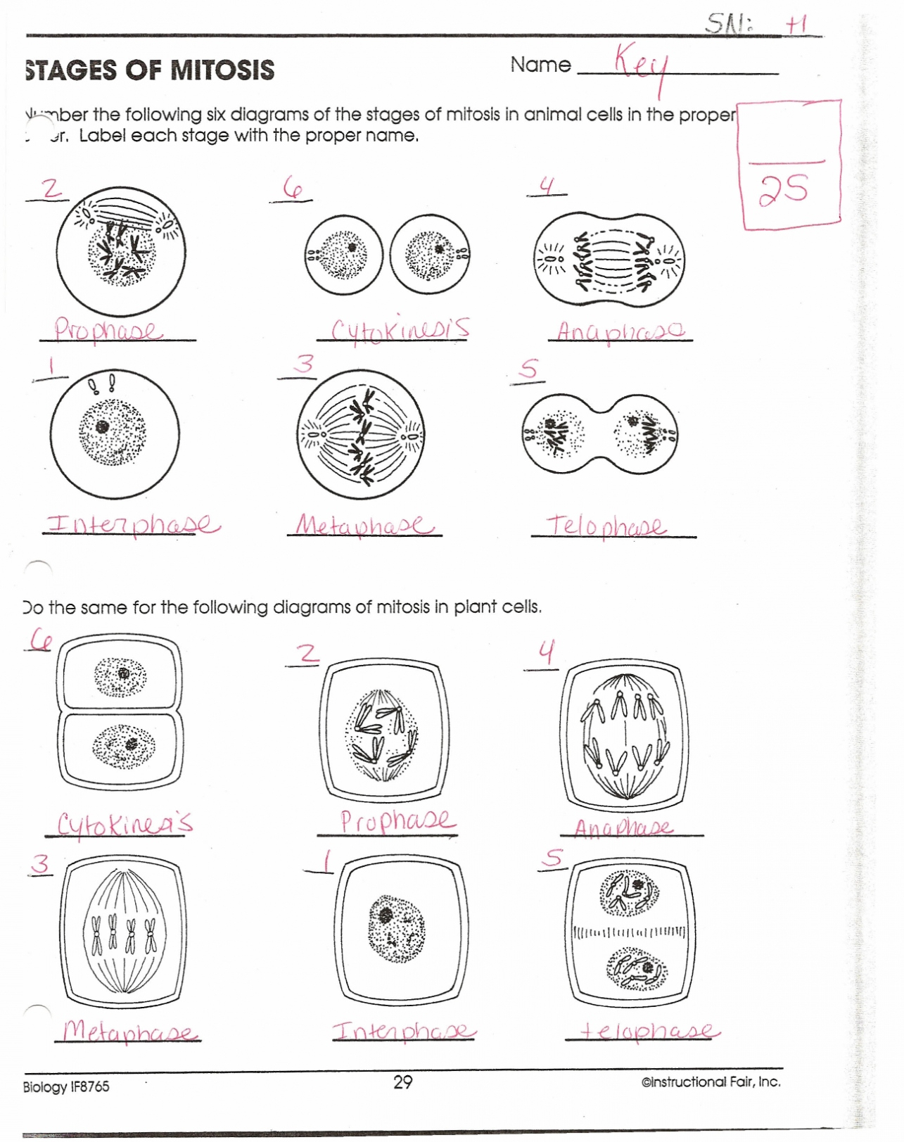 Mitosis Meiosis Venn Diagram Beneficial Mitosis Worksheet And Diagram Identification Answers