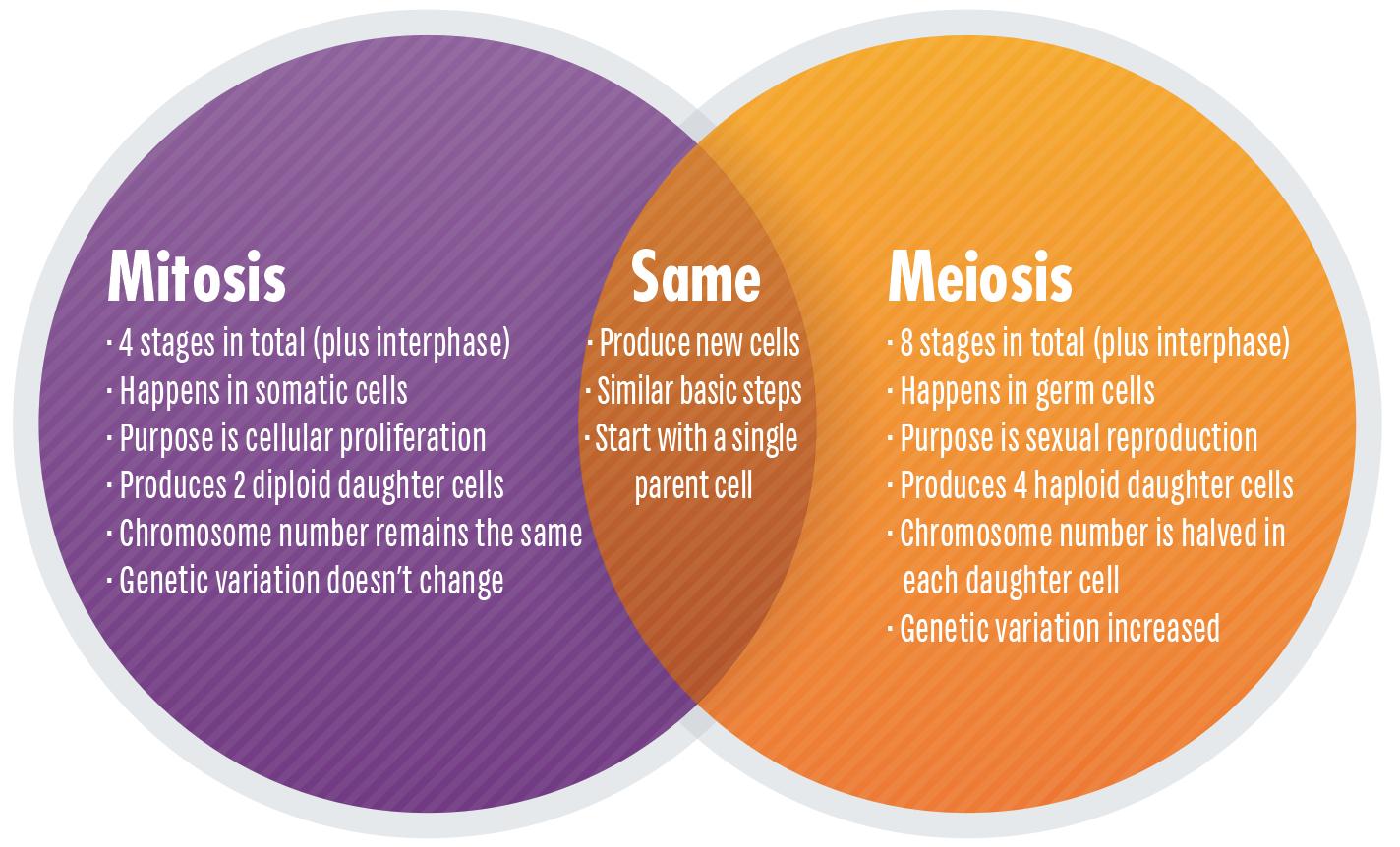 Mitosis Meiosis Venn Diagram Mitosis Vs Meiosis Key Differences Chart And Venn Diagram