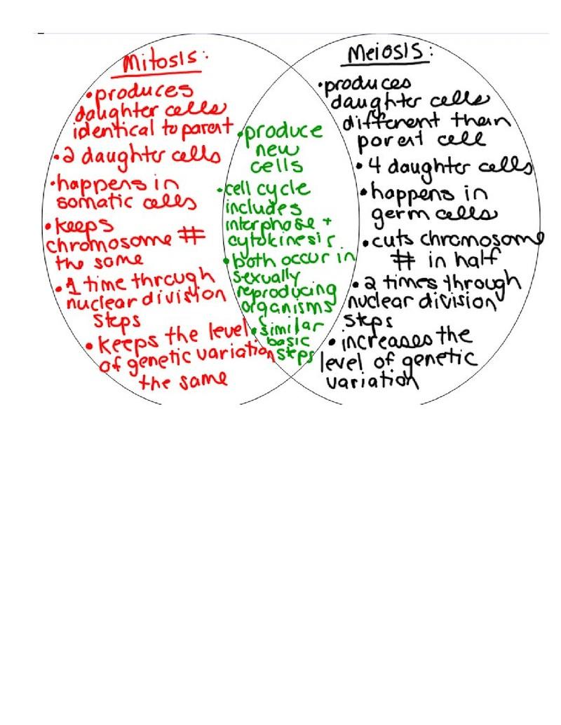 Mitosis Meiosis Venn Diagram Mitosis Vs Meiosis Venn Diagram Wiring Diagram