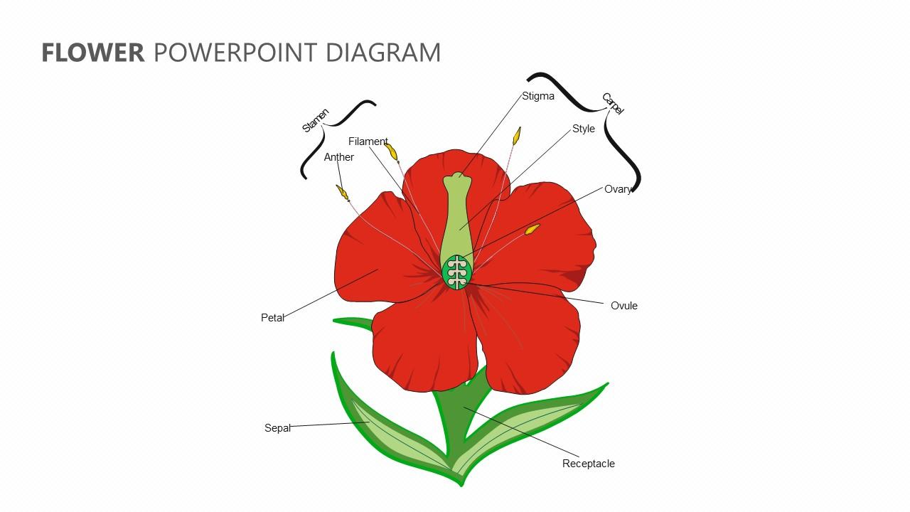 Parts Of A Flower Diagram Flower Powerpoint Diagram Pslides
