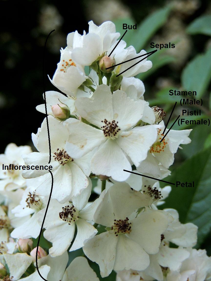 Parts Of A Flower Diagram Parts Of A Flower A Diagram That Plant Geek