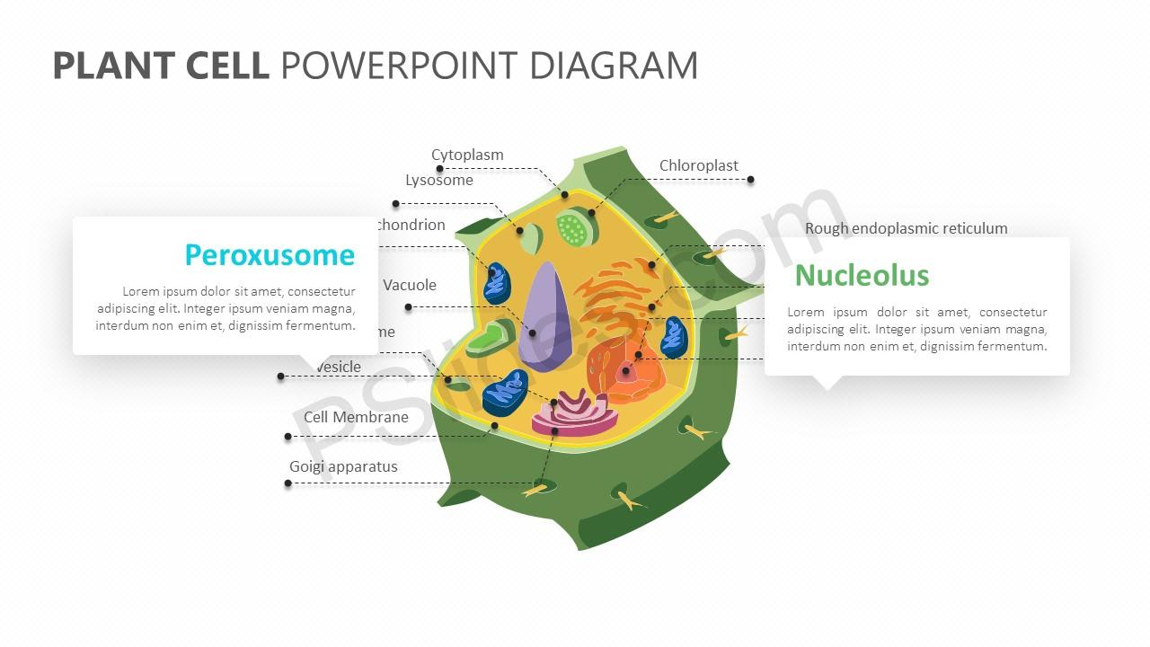 Plant Cell Diagram Plant Cell Powerpoint Diagram Pslides