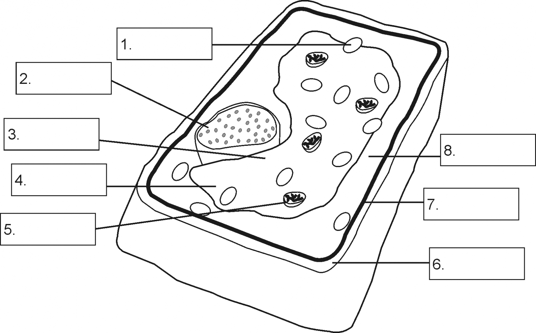 Plant Cell Diagram Simple Plant Cell Drawing At Paintingvalley Explore Collection