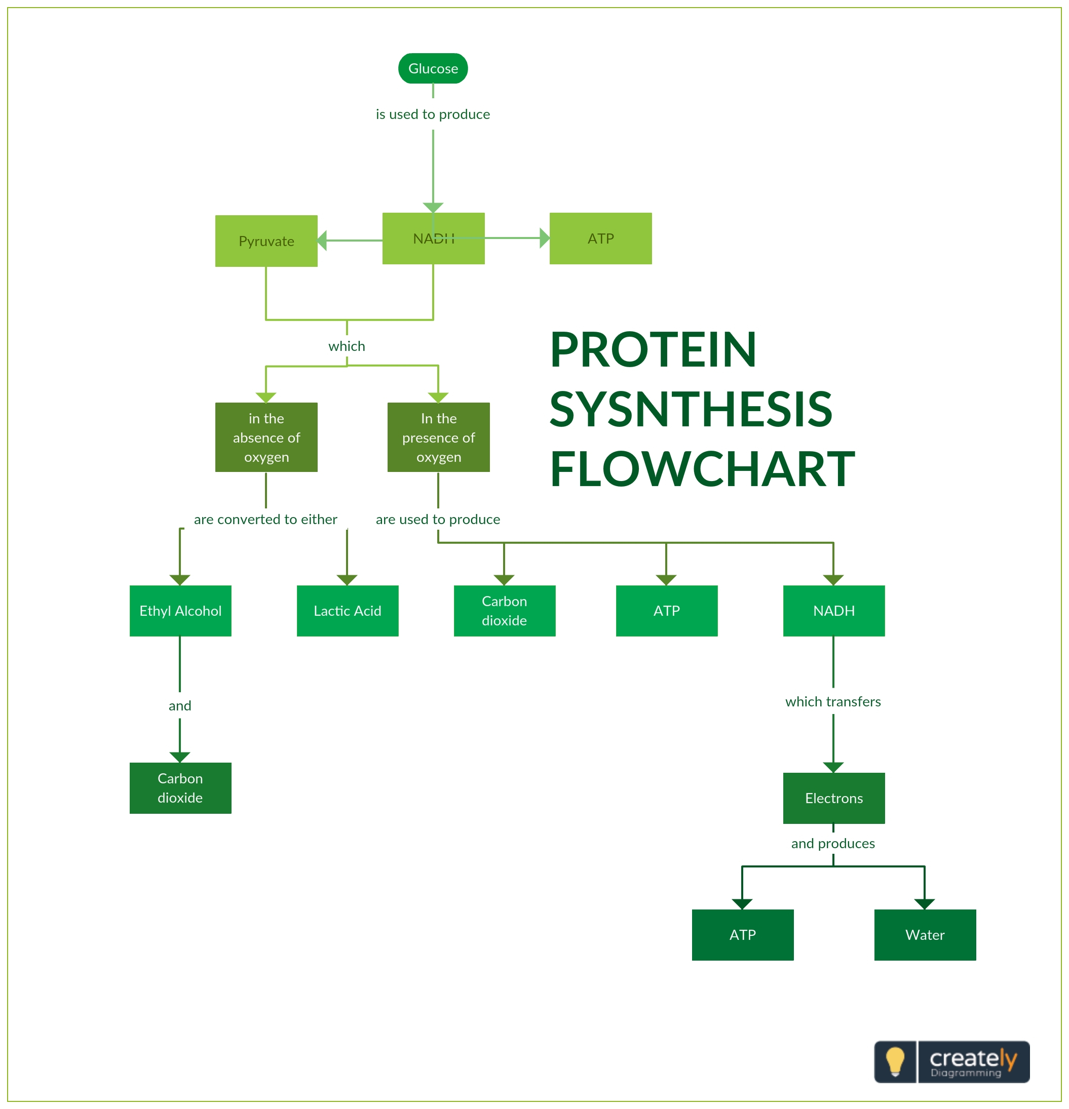 Protein Synthesis Diagram Lines Protein Synthesis Flow Chart Chart