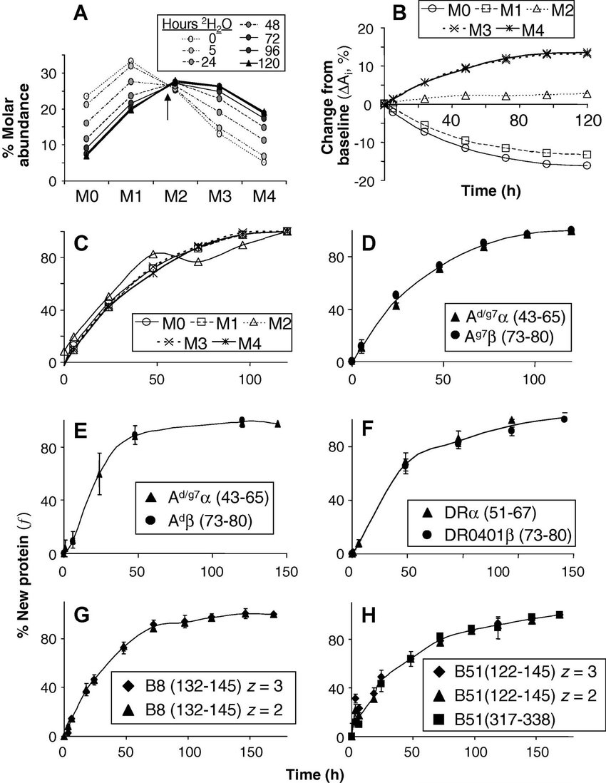 Protein Synthesis Diagram Measurement Of Fractional Mhc Protein Synthesis A D Analysis Of