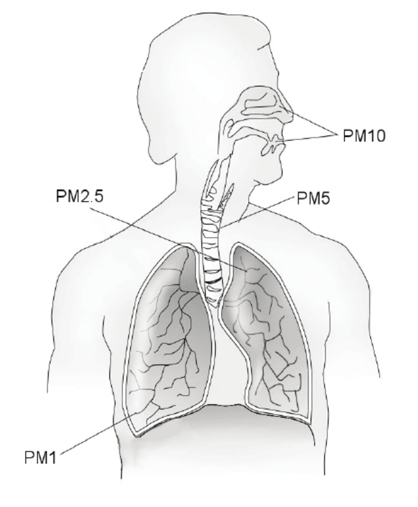 Respiratory System Diagram Pm Deposition In The Respiratory System The Major Conduit For The