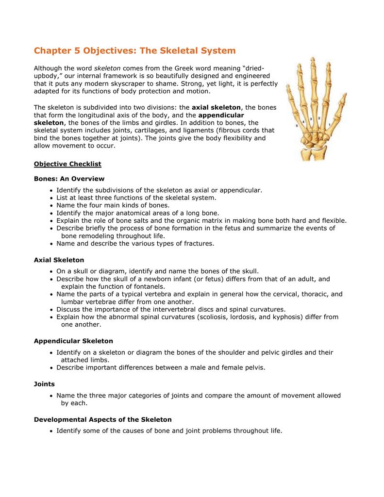 Skeletal System Diagram Chapter 5 Objectives The Skeletal System