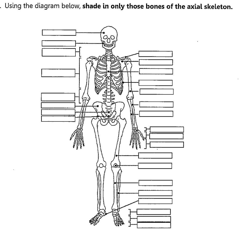 Skeletal System Diagram Skeletal System Diagram Left Side Diagram Quizlet