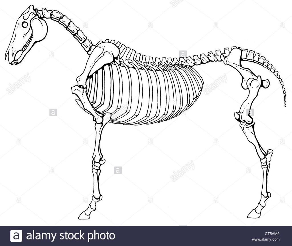 Skeletal System Diagram Skeletal System Diagram Quizlet
