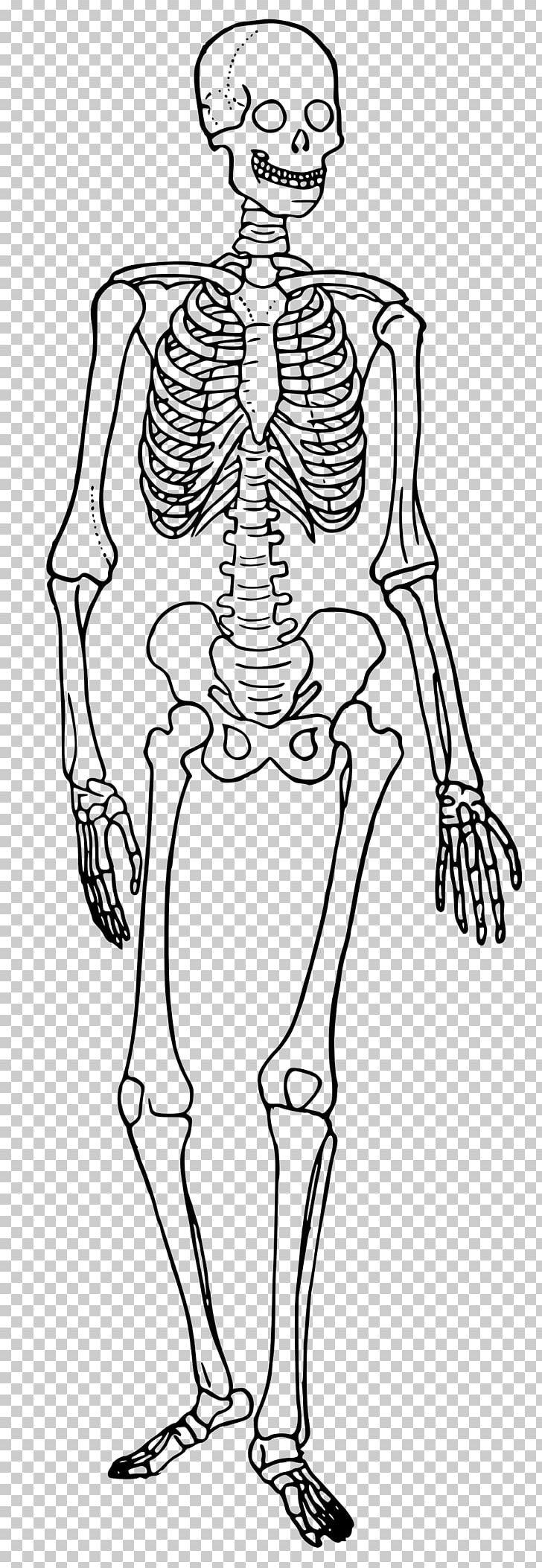 Skeletal System Diagram The Skeletal System Human Skeleton Human Body Diagram Bone Png