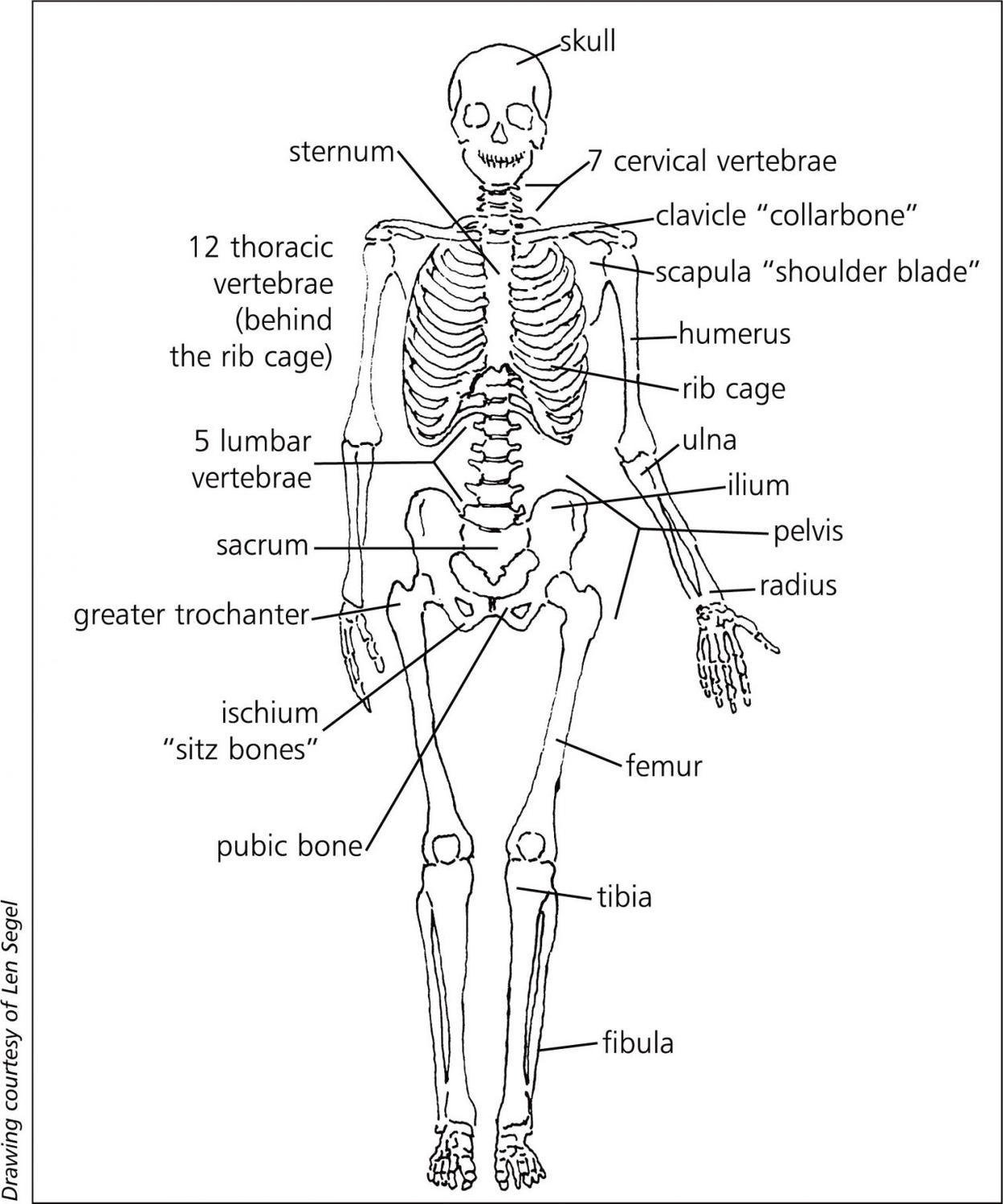 Skeletal System Diagram The Skeletal System Lesson 0385 Tqa Explorer