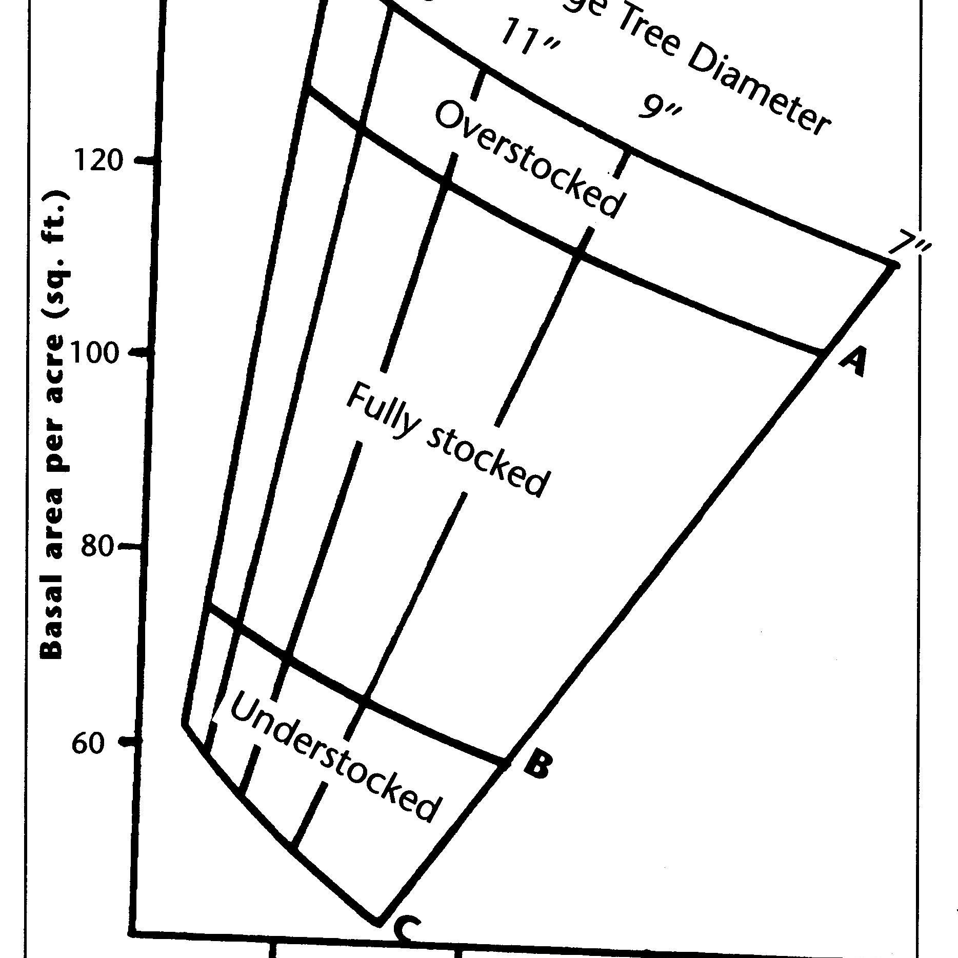 Tree Diagram Definition Math Understanding Forest Basal Area