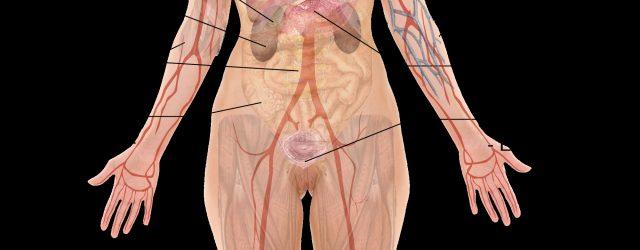 Woman Body Diagram Woman Of Upper Torso Diagram Wiring Diagram Review